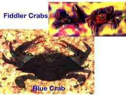 Pass Crab