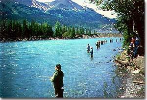 Kenai river of alaska for Kenai river salmon fishing