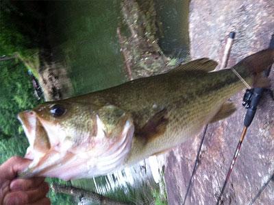 Lake james of north carolina for Lake james nc fishing