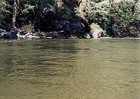 Sacramento river upper of california for Sacramento river fishing spots