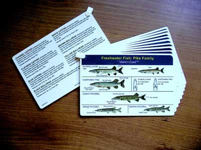 Identicards Fish Identification Cards Set/8