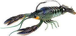 River2Sea Dahlberg Clackin' Crayfish 06 - Blue Olive