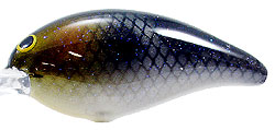 Norman DD22 341 - Gizzard Shad