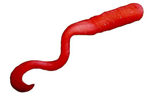 Slimer-Worm-Leech