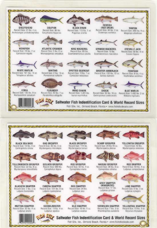 Saltwater fish list list of fish in florida 2017 fish for Nc saltwater fishing regulations 2017