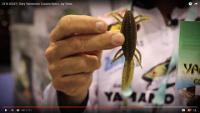 Gary Yamamoto Sanshouo Salamander Video