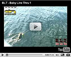 Optimum Baby Line Thru Video