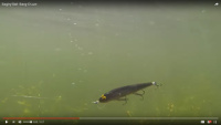Bagley Bang-O-Lure Video
