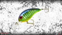 Bandit Lures 200 Series Crankbaits Video