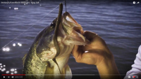 Berkley PowerBait MaxScent Kingtail Video