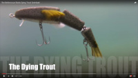 Bettencourt Baits Dying Trout Swimbait Video