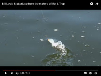 Video: Bill Lewis StutterStep Topwater
