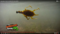Video: Doomsday Tackle Doomsday Turtle