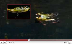 Koppers  Live Target Walking Frog Video