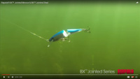 Rapala BX Jointed Minnow Video