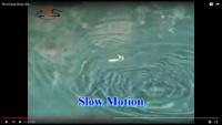 River2Sea Bully Wa Frogs Video