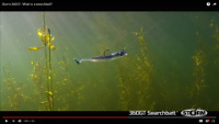 Video: Storm 360 GT Searchbait