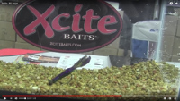 Xcite Baits Raptor Tail Jr. Video