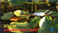 Video: Zoom Bait Hollow Body Frog