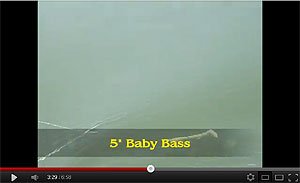 Baby Bass Swimbait