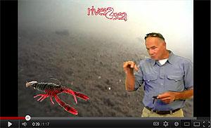 River2Sea Dahlberg Clackin' Crayfish Video