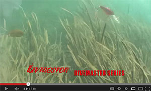 Livingston Lures Dive Master 14 Crankbait Video