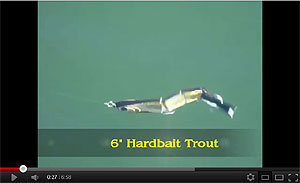 Real Fish Bait Company Hard Trout (slow sink) Swimbait Video