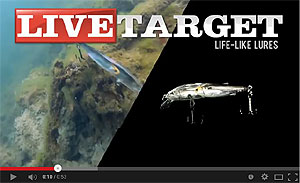 Koppers  Live Target Glass Minnow Baitball Jerkbait Video